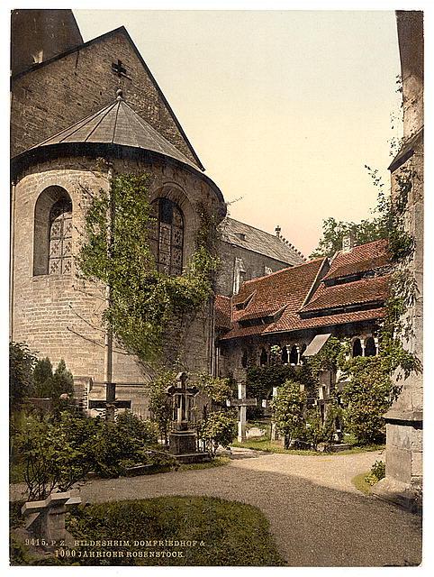 Tausendjähriger Rosenstock Hildesheim