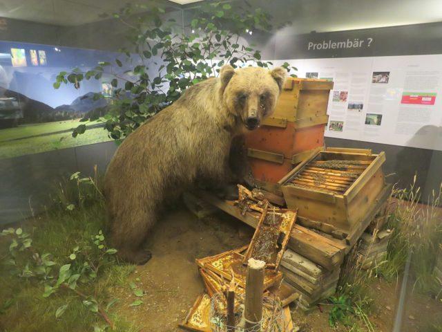 Bruno der bär Museum Mensch und Natur