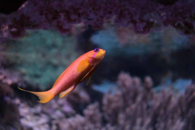 Sealife Hessen