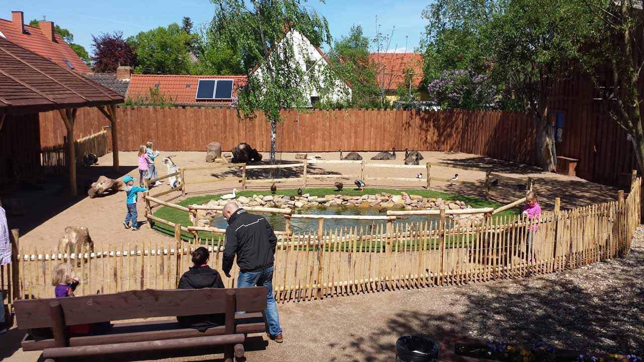 Erlebnistierpark Memleben Seebären-Show