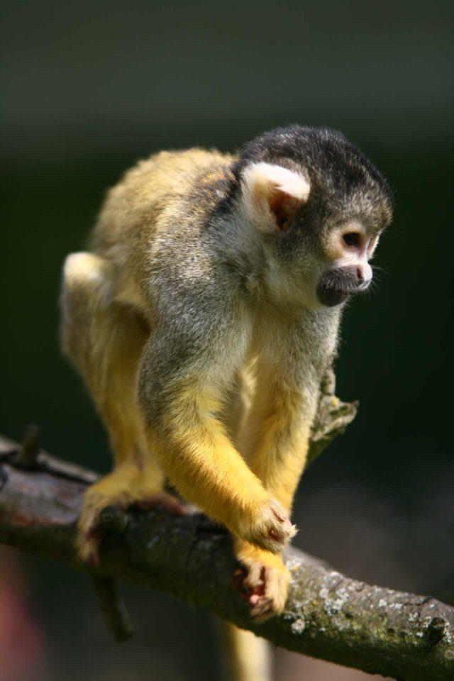 Gut Eversum Tier und Freizeitpark