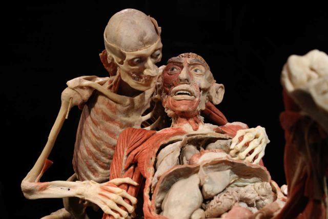 Körperwelten Menschen Museum Berlin