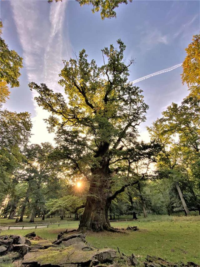 Baumkronenpfad Ivenacker Eichen